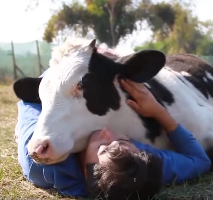rencontres en ligne pour les animaux