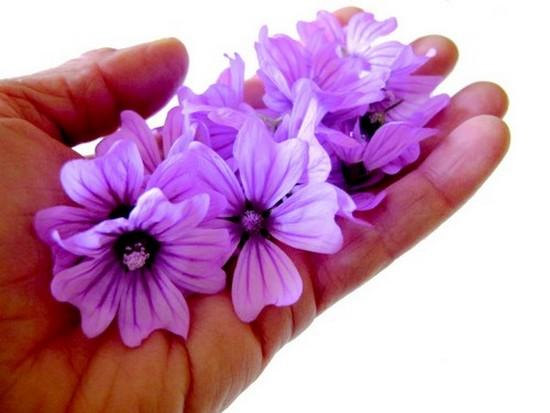 j2mains-fleurs.jpg